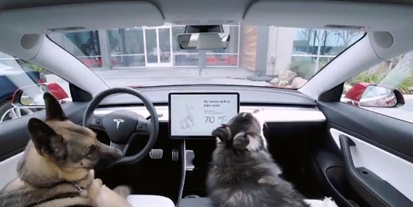特斯拉推狗狗模式:提醒路人狗狗在车内十分安全