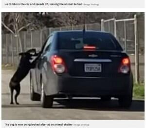 引发众怒!美国一男子将爱犬遗弃湖边开车扬长而去