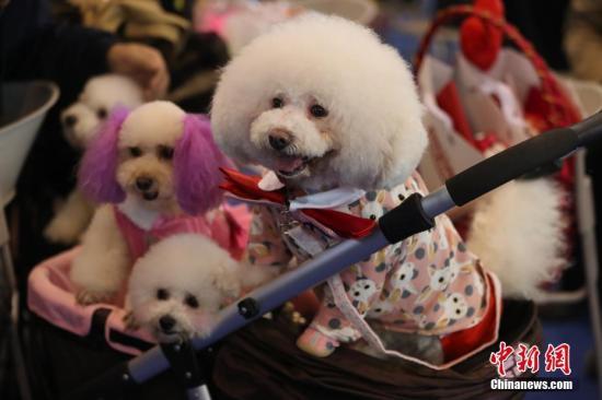 澳大利亚宠物狗日托中心流行 日均花费达51澳元