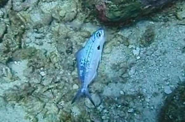 暖心!泰国潜水教练救助被困塑料袋中小鱼