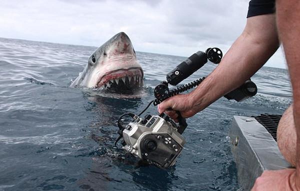澳摄影师近距离拍摄大白鲨定格惊魂一刻
