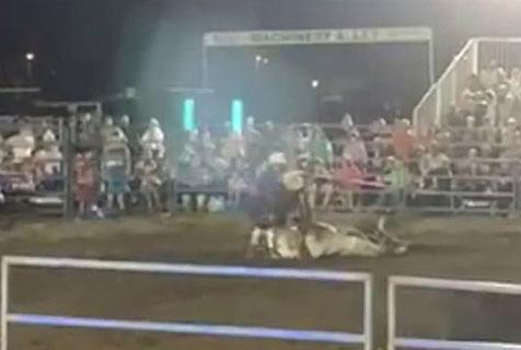 澳竞技赛中一公牛身体崩溃多次倒下令人痛心