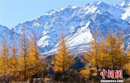 甘肃张掖统筹整合资金 修复保护祁连山黑河流域生态