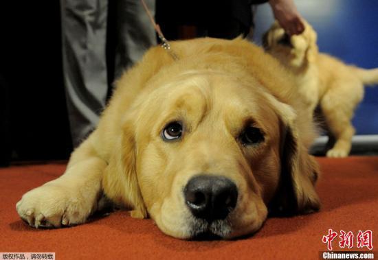 澳大利亚女子严格坚持素食主义 爱犬只能吃素食