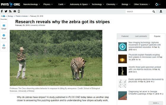 斑马为何身披黑白条纹?研究发现或为躲避蚊虫叮咬