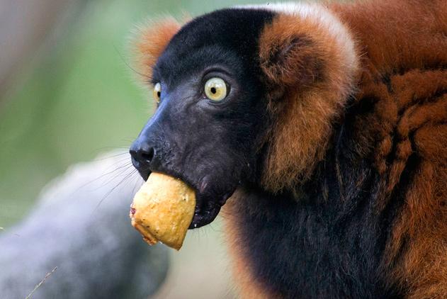 围观动物界的吃货们 因贪吃囧相百出