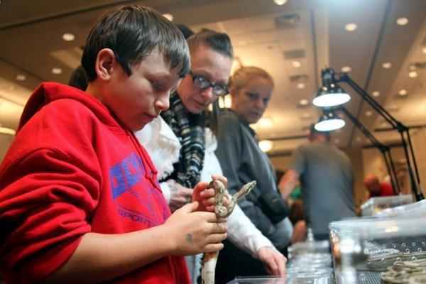 多伦多举行加拿大爬行动物博览会 小朋友与蛇亲密接触