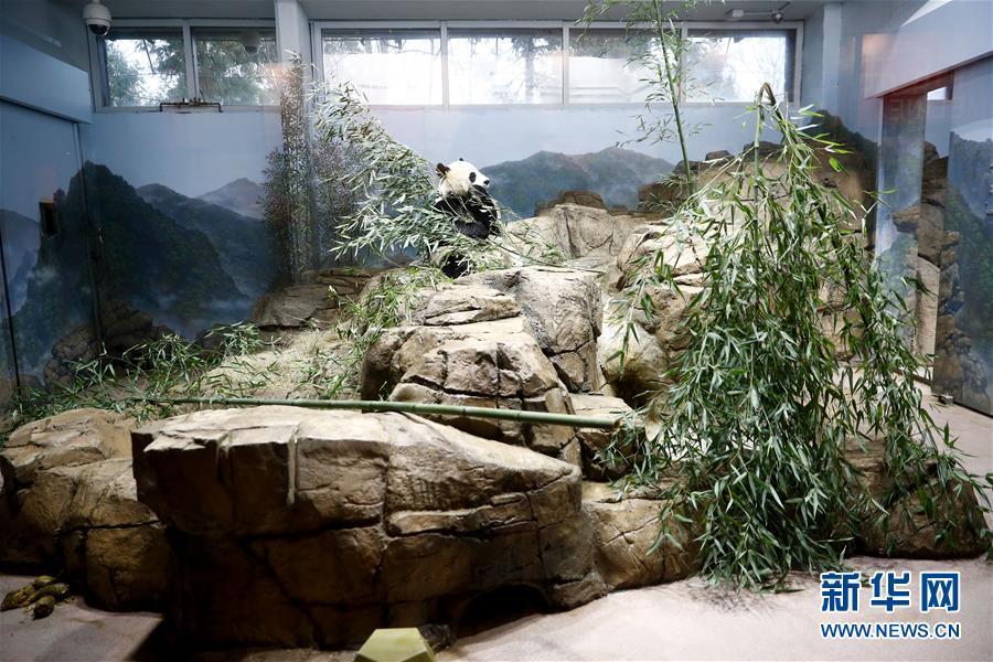 美国国家动物园大熊猫馆开派对
