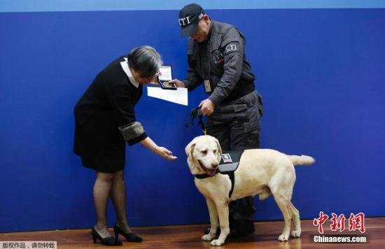 新西兰嗅探犬数量告急 数千邮轮旅客未经检查就放行