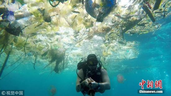 塑料或找到替代品!研究:鱿鱼体内蛋白质可替代塑料