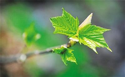 气候变暖致植物生长季延长?2000年后停止