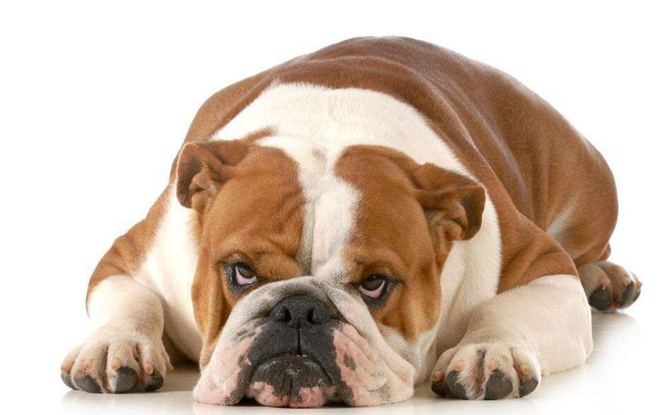 全国政协委员:消除狂犬病把疫苗打给狗