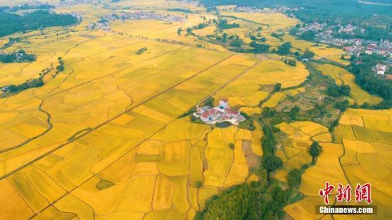 如何看待去年粮食产量下降?农业农村部这样回应
