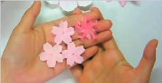 五彩缤纷的浪漫樱花