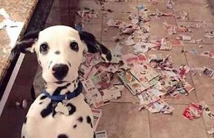 拆家狗,拆家狗,家不拆完不是狗