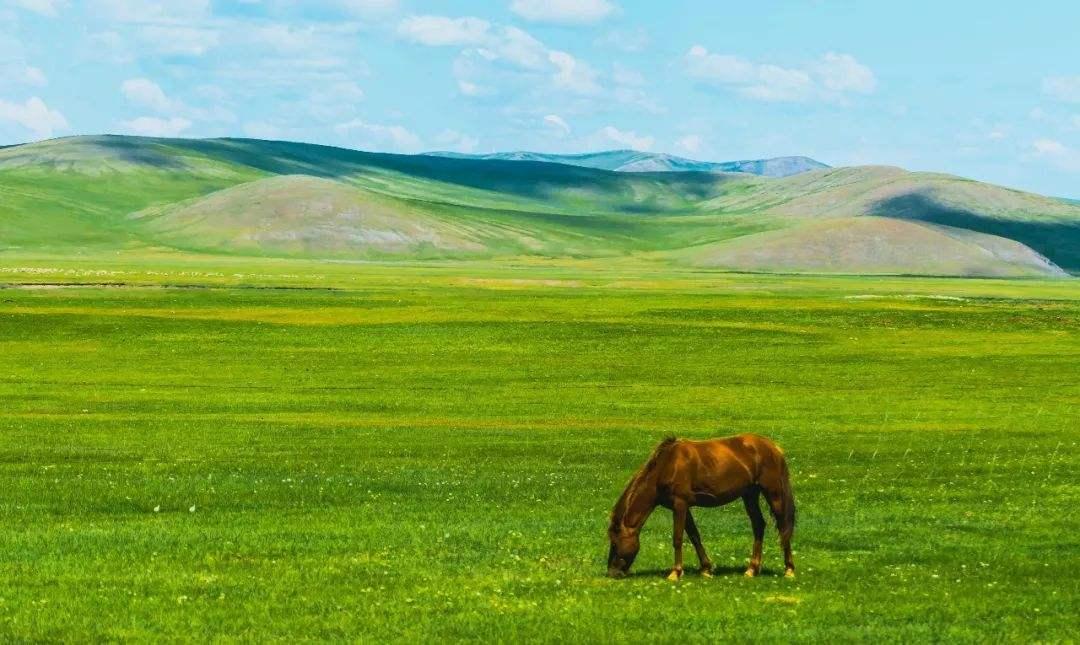 内蒙古草原平均植被盖度连续3年稳定在44%
