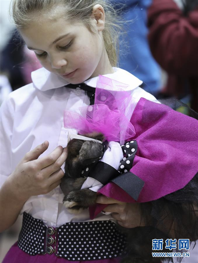 休斯敦牛仔节举行宠物服装大赛