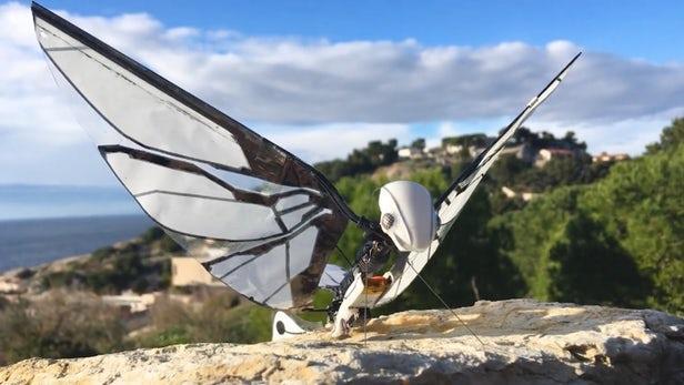 MetaFly飞行机器昆虫亮相:最高时速18公里/小时