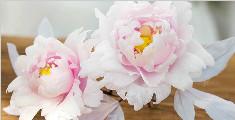 教你自制一朵绚丽的牡丹花