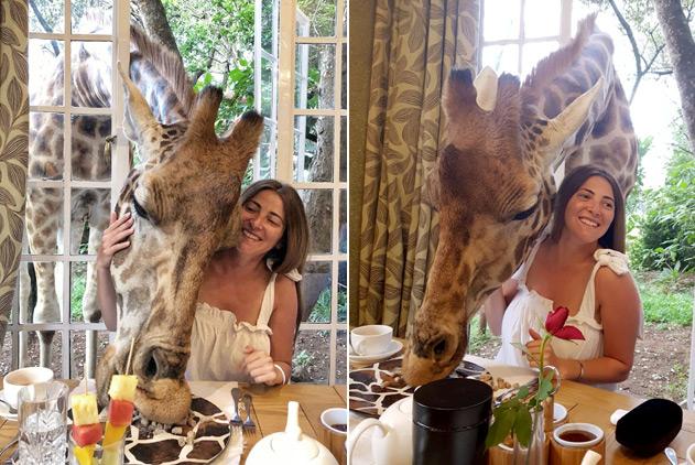 """肯尼亚长颈鹿不拿自己当外人 公然""""打劫""""游客早餐"""