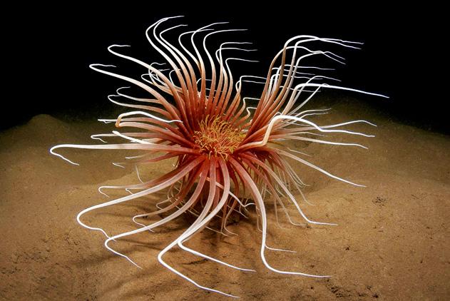 奇妙水下世界!摄影师耗时六年拍奇特海洋动物