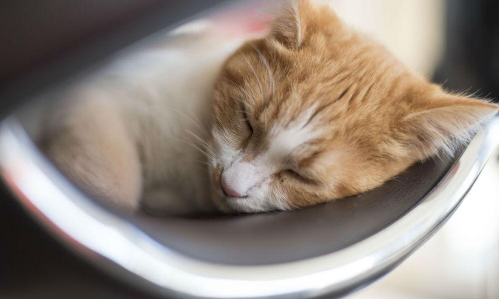 专家:白噪音并非拯救睡眠的灵丹妙药 需慎重