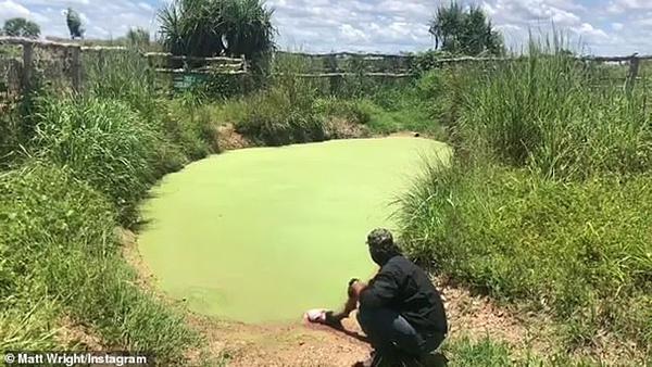 惊险一刻!鳄鱼从水塘中冲出扑向驯养师