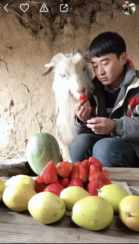快手第一羊:贪吃万物