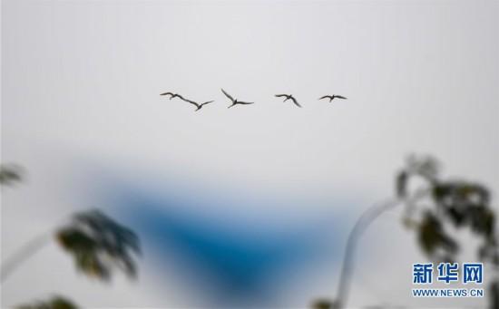 早春琵鹭飞