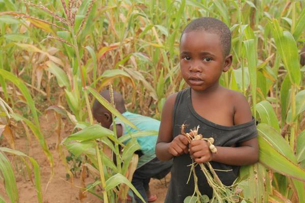 津巴布韦预计今年逾700万人将面临粮食短缺