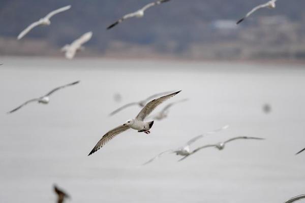 吉林珲春龙山湖:候鸟迁徙停歇站