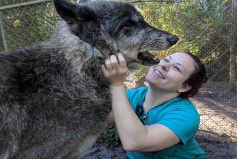 美大狼狗癌症晚期 最后日子爱和人亲亲抱抱