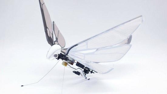 像蝴蝶一样扇动翅膀飞行 它比无人机更有趣
