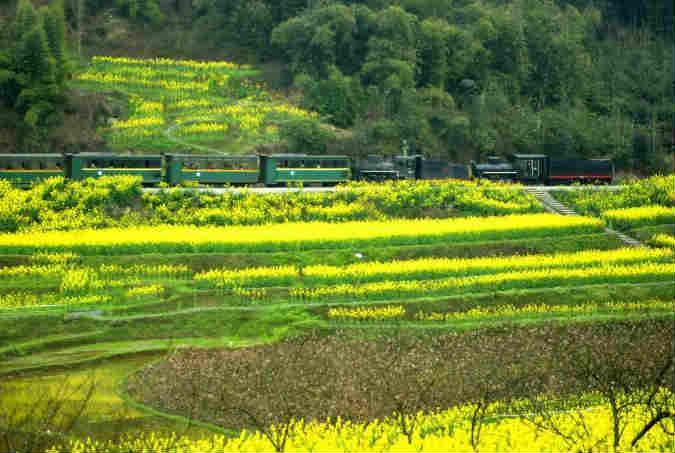 """开往春天的小火车开启""""花季之旅"""""""