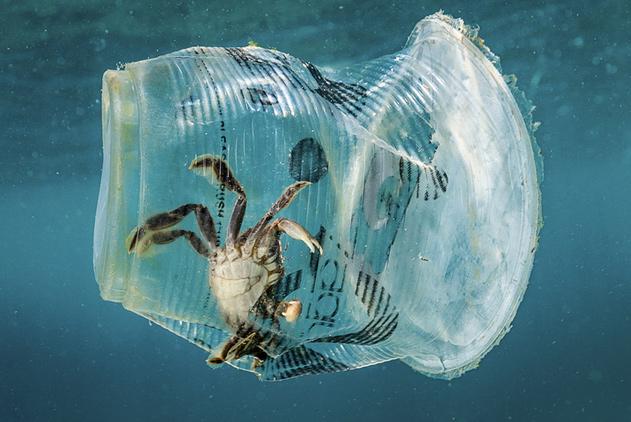 菲律宾塑料垃圾污染严重 生物多样性中心变致命陷阱