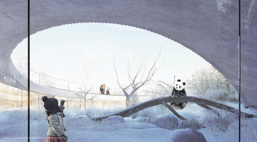 大熊猫即将定居 丹麦驻华大使全程护送