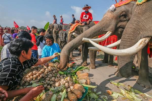 """泰国""""大象日"""" 古都大城为象群准备水果大餐"""