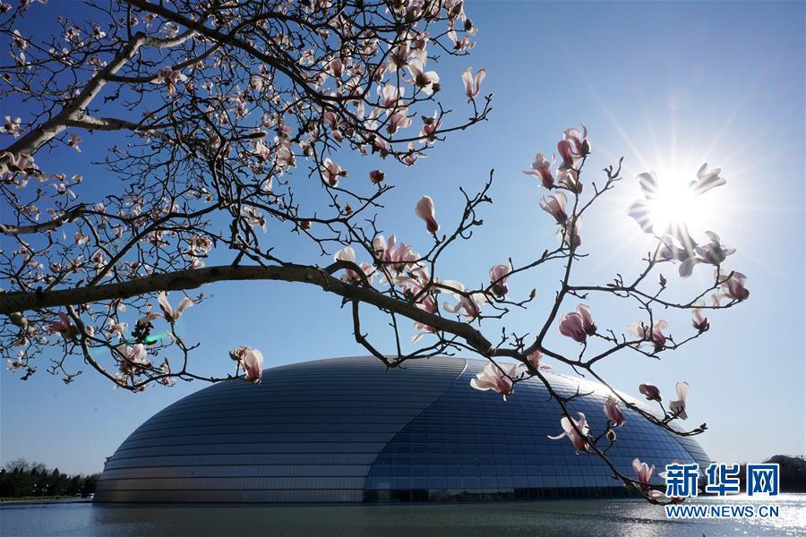 京城春暖花渐开