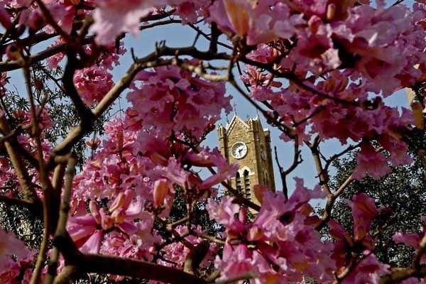 黎巴嫩贝鲁特:春天到 花儿盛开