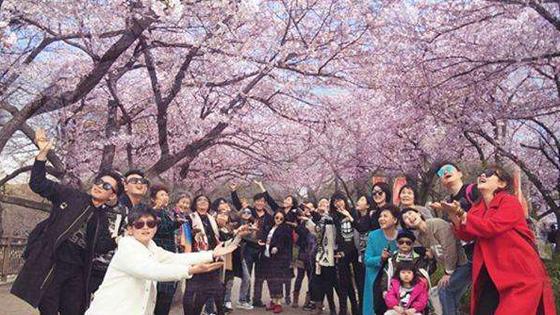 日媒:去日本赏樱花的中国人更加注重礼仪