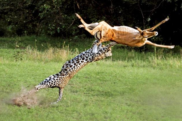 前方高能!围观动物界的战斗 激烈程度堪比功夫大片