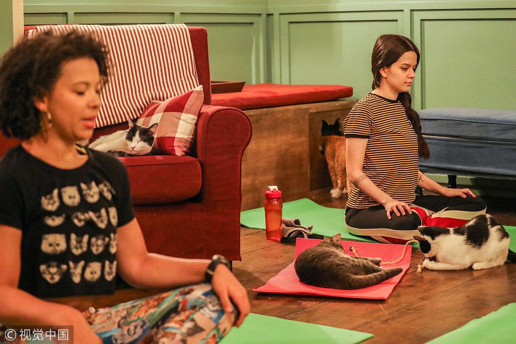 当地时间2019年3月13日,美国纽约布鲁克林,当地一家猫咖啡馆举办猫咪主题瑜伽课。
