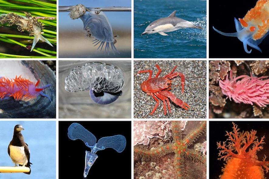 研究:海洋热浪导致美国大批温水物种异常北迁