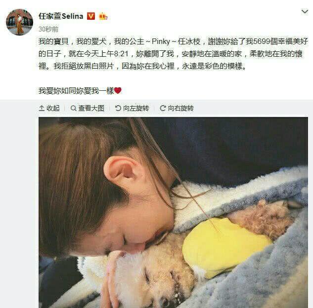 Selina发文悼念曾陪伴她的狗狗,这只狗曾出现在电视剧和演唱会上