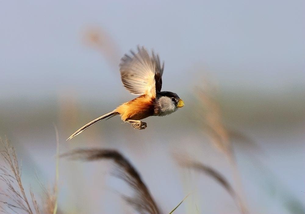 国家林业和草原局:严禁用无人机拍鸟