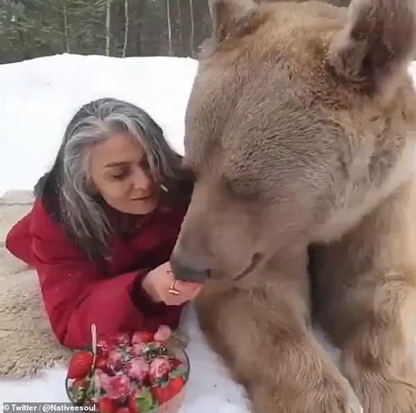 惊人!女子淡定趴雪地上给棕熊喂食草莓