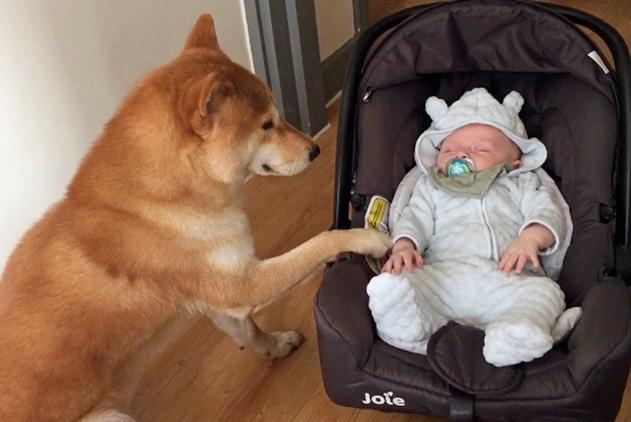 """围观宠物带娃当""""保姆"""" 尽职尽责陪伴小主人"""