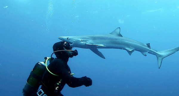 奇妙!潜水员海底探险遇鲨鱼获其温柔献吻