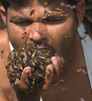 """大口""""吃""""活蜂!印度采蜜人堪称蜂?#19981;?#28781;者"""