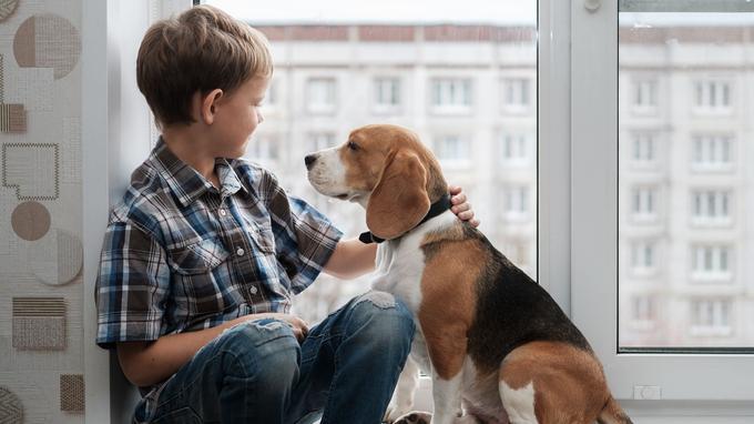 狗狗也能当医生?专家称动物协助利于治疗儿童语言障碍